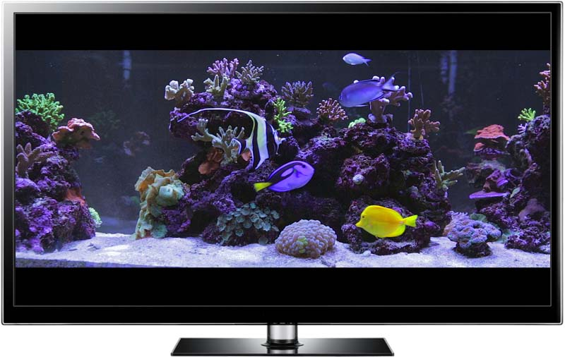 Aquarium video downloads for hd tv and aquarium for Fish tank screen